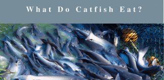 best-catfish-rigs