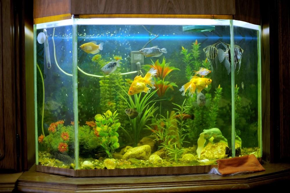 How to Raise pH of Aquarium Water: Best Reverse Osmosis System