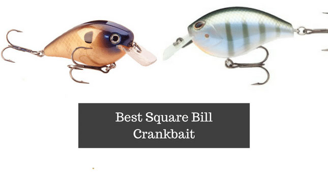 Best-Square-Bill-Crankbait