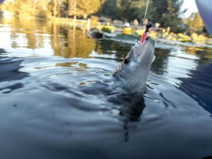 How to Catch a Crappie