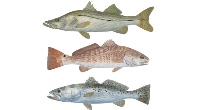 What lures to use for redfish