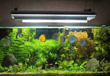 how to clean a fish tank without killing the fish