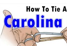 how-to-tie-a-Carolina-rig