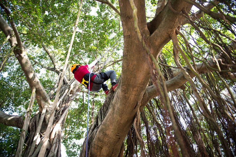 Guide-To-Purchasing-Your-Tree-Climbing-Gear-(Infographic)