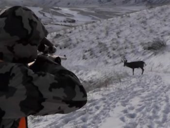 When is the perfect season for Deer Hunting