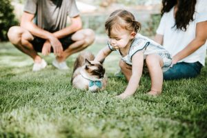 Best Guide to Outdoor Cat Enclosures & Playpens