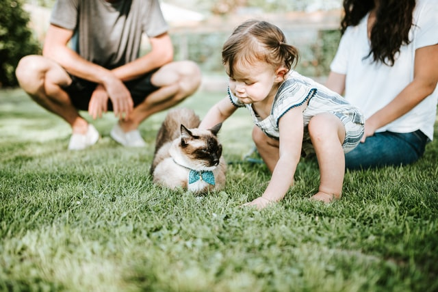 Best Guide to Outdoor Cat Enclosures & Playpens