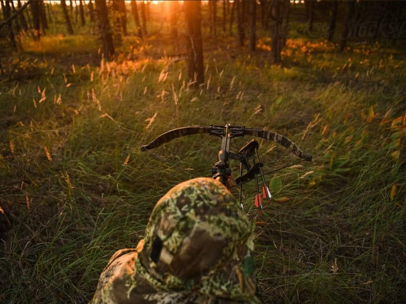 5 Reasons to Choose a Crossbow Over a Compound Bow